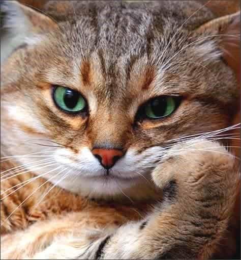 Cat pondering